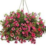 ASP Mission Trip Annual Flower Sale Fundraiser